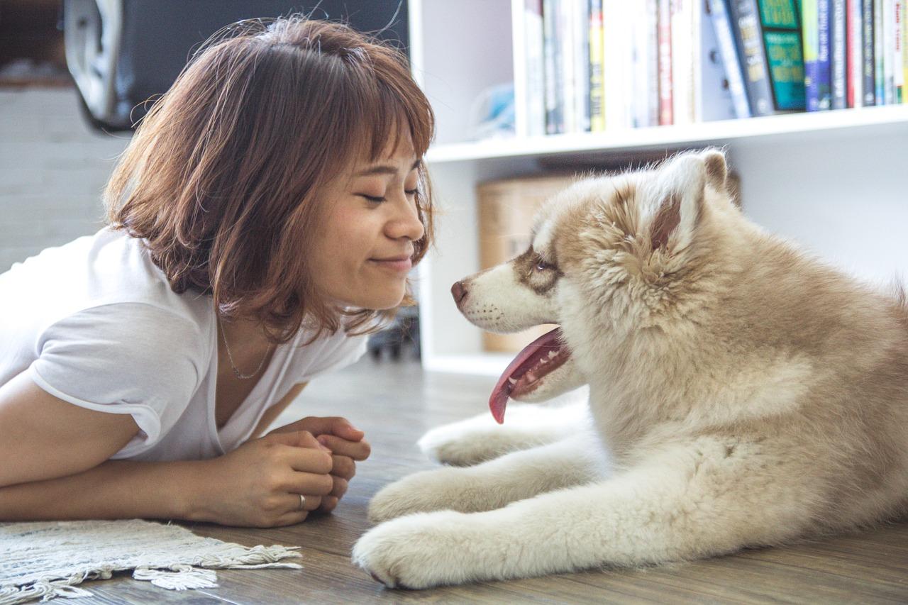 dia-mundial-del-perro